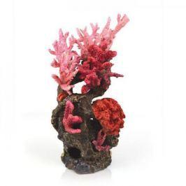 Oase Červený korálový útes