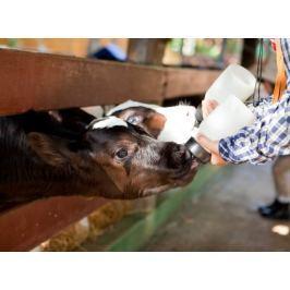 Poukaz Allegria - jeden den farmářem