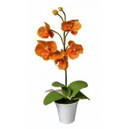EverGreen Orchidea v květináči výška 35 cm, oranžová