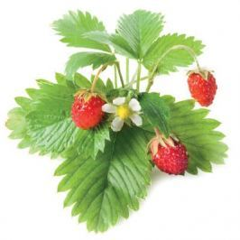 Click and Grow náplň pro smart květináče a farmy - Lesní jahody, 3ks v balení