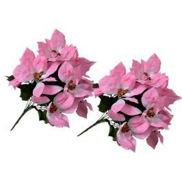 EverGreen Poinsettia velkokvětá 2 ks růžová