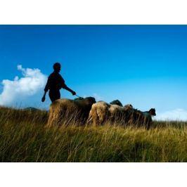 Poukaz Allegria - pastevcem na den