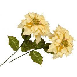 EverGreen Poinsettia velkokvětá 2 ks krémová
