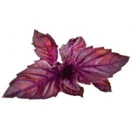 Click and Grow náplň pro smart květináče a farmy - Červená bazalka, 3ks v balení