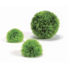 Oase Sada zelené vodní koule