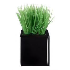 Travina malá v černém květináči ASA Selection
