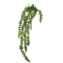 Sukulentní rostlina DECO ASA Selection - velká