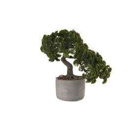 Bonsai cypřiš 24,5 cm ASA Selection